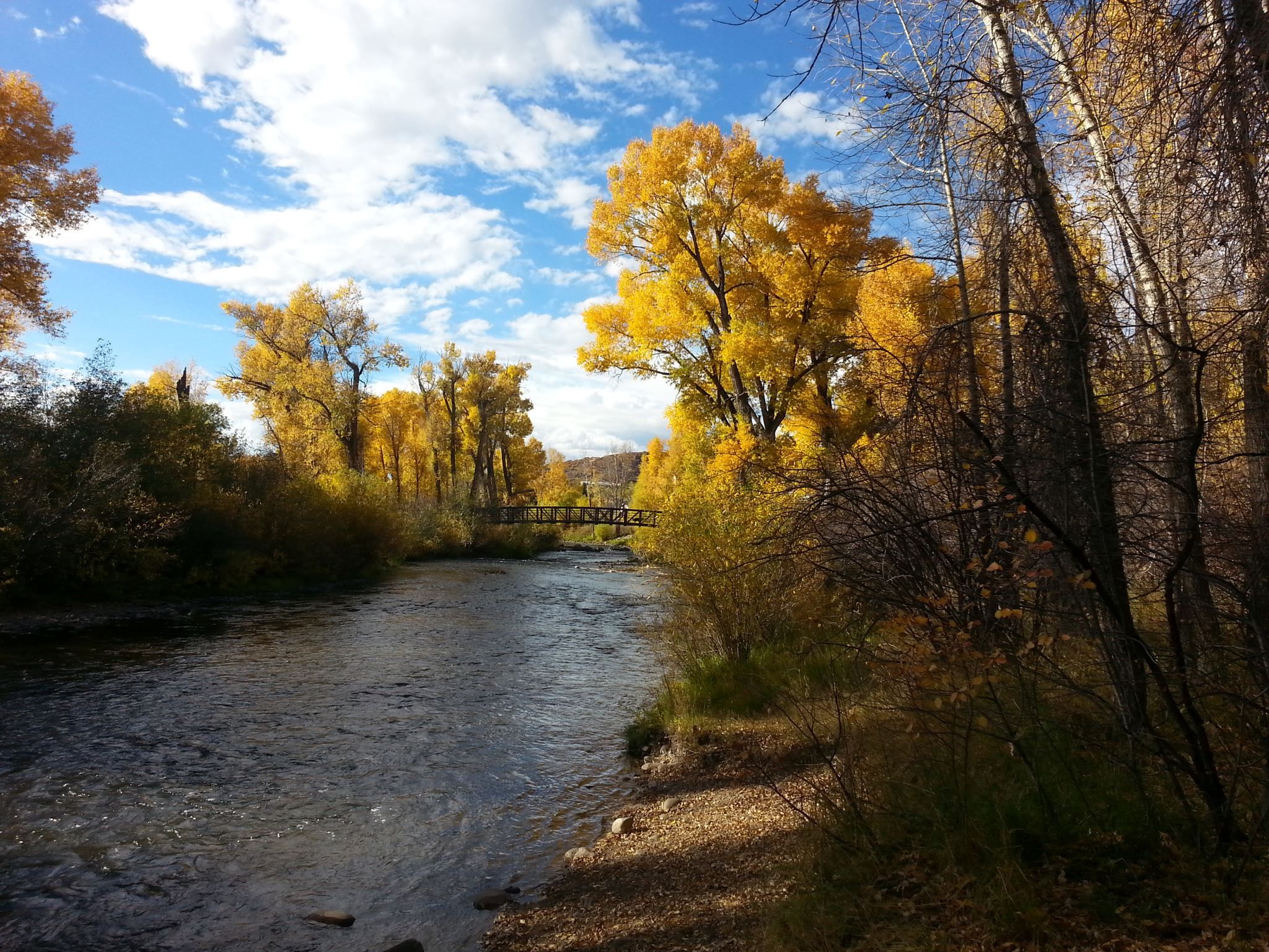 Yampa River with oak trees along the river fall colors