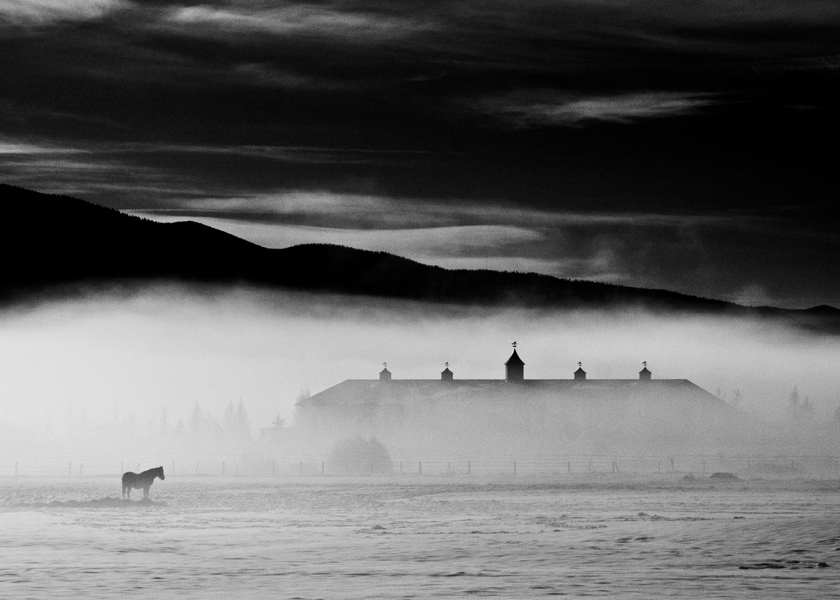 horse in field with fog